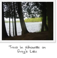 Trees in silhouette on Grey's Lake